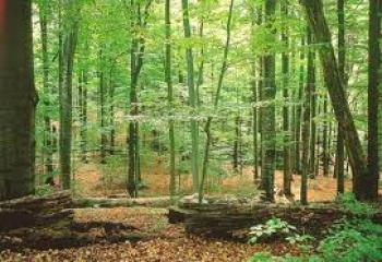 """Результат пошуку зображень за запитом """"Лісничі разом з дітьми взялися відновлювати ліс"""""""
